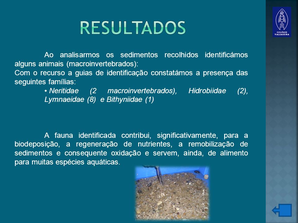 Ao analisarmos os sedimentos recolhidos identificámos alguns animais (macroinvertebrados): Com o recurso a guias de identificação constatámos a presença das seguintes famílias: Neritidae (2 macroinvertebrados), Hidrobiidae (2), Lymnaeidae (8) e Bithyniidae (1) A fauna identificada contribui, significativamente, para a biodeposição, a regeneração de nutrientes, a remobilização de sedimentos e consequente oxidação e servem, ainda, de alimento para muitas espécies aquáticas.