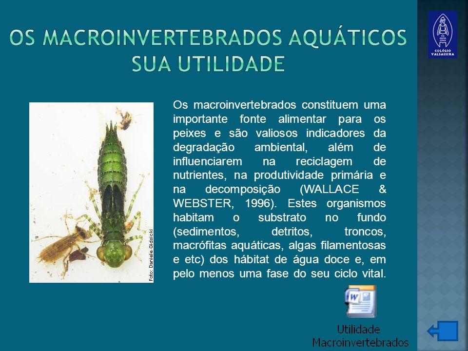 Os macroinvertebrados constituem uma importante fonte alimentar para os peixes e são valiosos indicadores da degradação ambiental, além de influenciarem na reciclagem de nutrientes, na produtividade primária e na decomposição (WALLACE & WEBSTER, 1996).