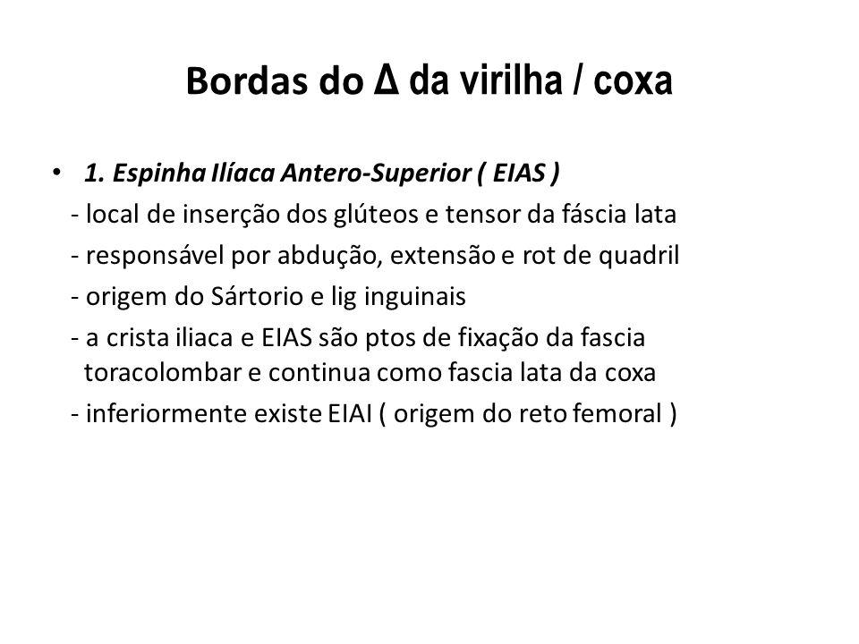 Bordas do Δ da virilha / coxa 1.