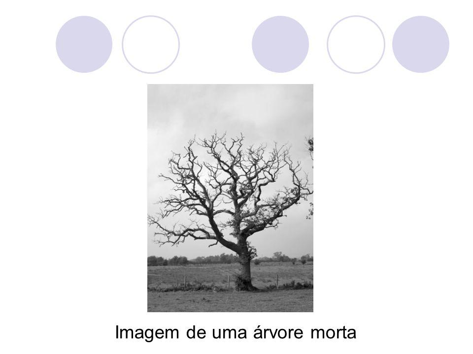 Imagem de uma árvore morta