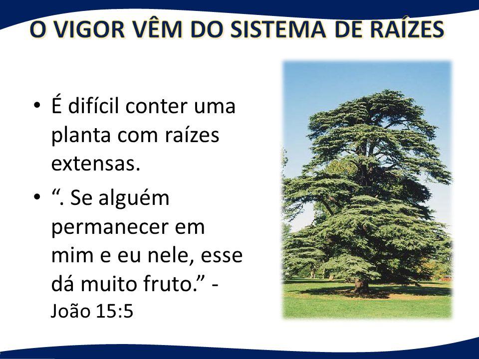 As raízes geram frutos – Metade da árvore não pode ser vista Para ter sucesso nas células você PRECISA implementar os valores!