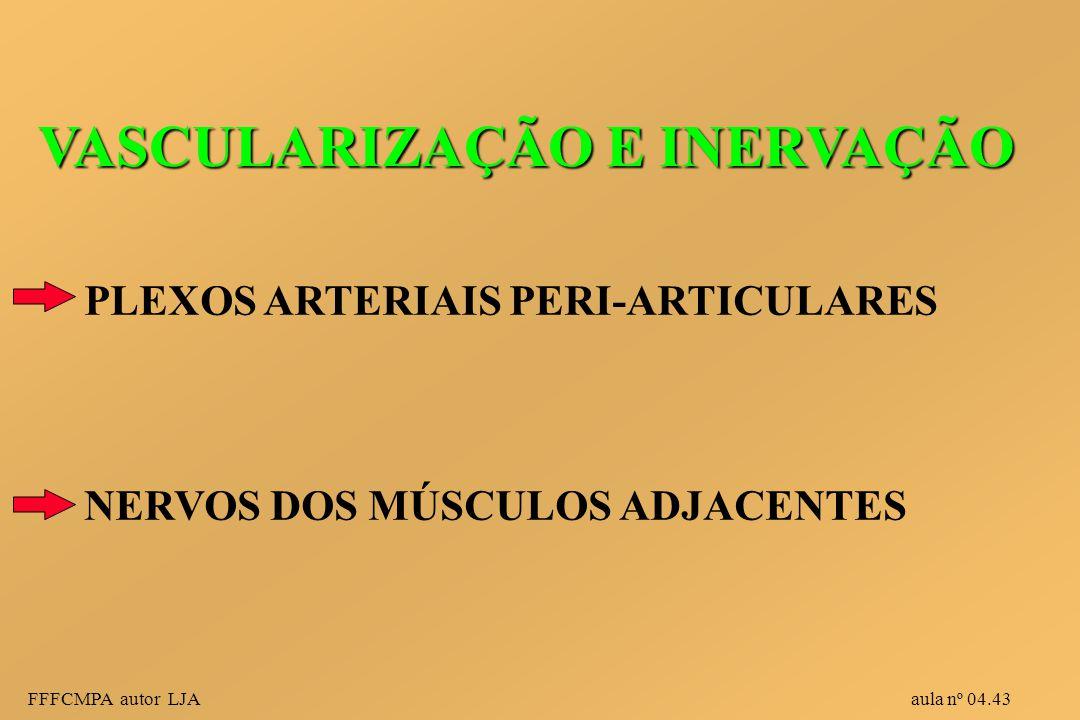 FFFCMPA autor LJA aula nº 04.43 VASCULARIZAÇÃO E INERVAÇÃO PLEXOS ARTERIAIS PERI-ARTICULARES NERVOS DOS MÚSCULOS ADJACENTES