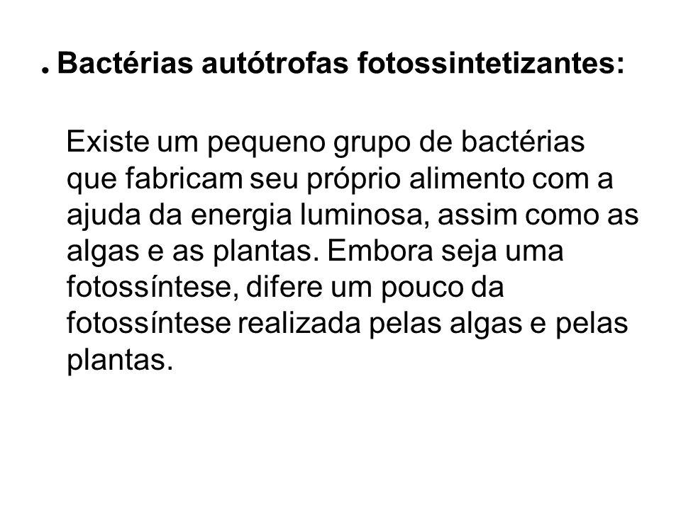 . Bactérias autótrofas fotossintetizantes: Existe um pequeno grupo de bactérias que fabricam seu próprio alimento com a ajuda da energia luminosa, ass