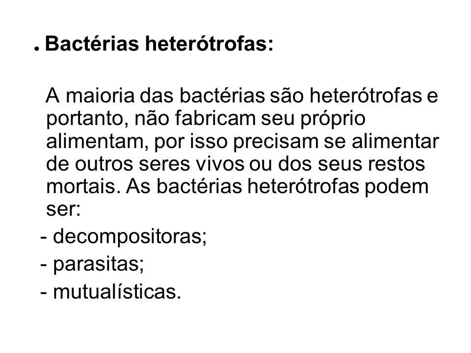 . Bactérias heterótrofas: A maioria das bactérias são heterótrofas e portanto, não fabricam seu próprio alimentam, por isso precisam se alimentar de o