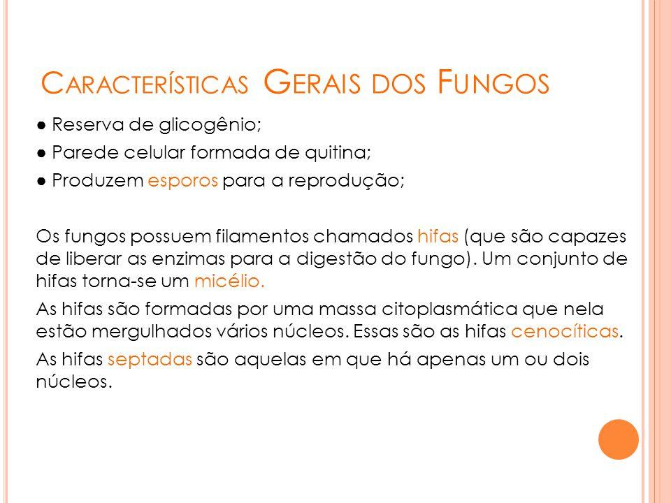 C ARACTERÍSTICAS G ERAIS DOS F UNGOS ● Reserva de glicogênio; ● Parede celular formada de quitina; ● Produzem esporos para a reprodução; Os fungos pos