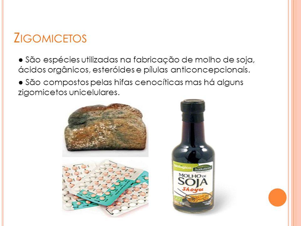 Z IGOMICETOS ● São espécies utilizadas na fabricação de molho de soja, ácidos orgânicos, esteróides e pílulas anticoncepcionais. ● São compostos pelas
