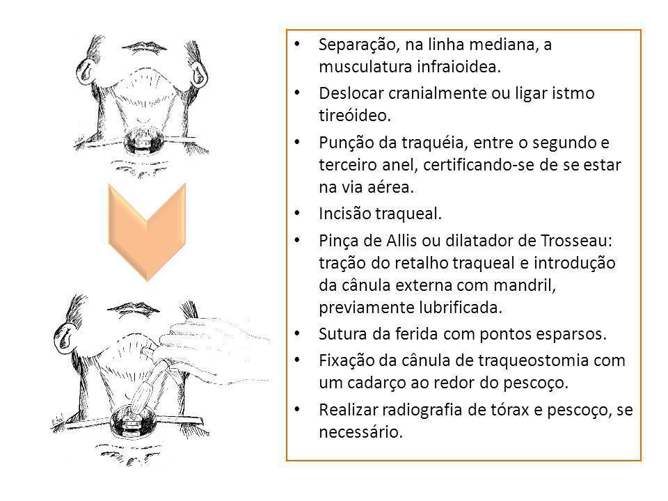 Separação, na linha mediana, a musculatura infraioidea. Deslocar cranialmente ou ligar istmo tireóideo. Punção da traquéia, entre o segundo e terceiro