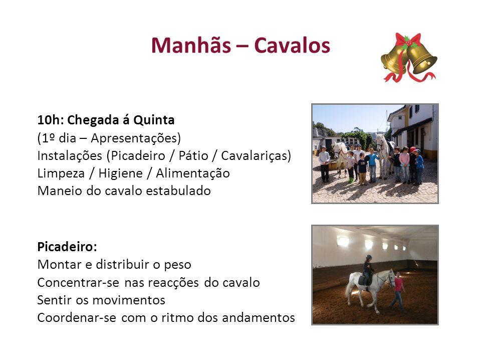 Manhãs – Cavalos 10h: Chegada á Quinta (1º dia – Apresentações) Instalações (Picadeiro / Pátio / Cavalariças) Limpeza / Higiene / Alimentação Maneio d