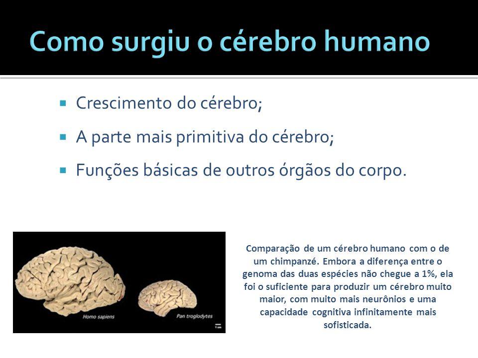 Comparação de um cérebro humano com o de um chimpanzé. Embora a diferença entre o genoma das duas espécies não chegue a 1%, ela foi o suficiente para