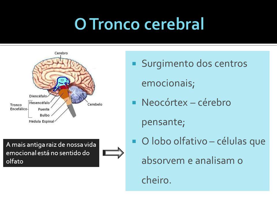 Surgimento dos centros emocionais;  Neocórtex – cérebro pensante;  O lobo olfativo – células que absorvem e analisam o cheiro. A mais antiga raiz