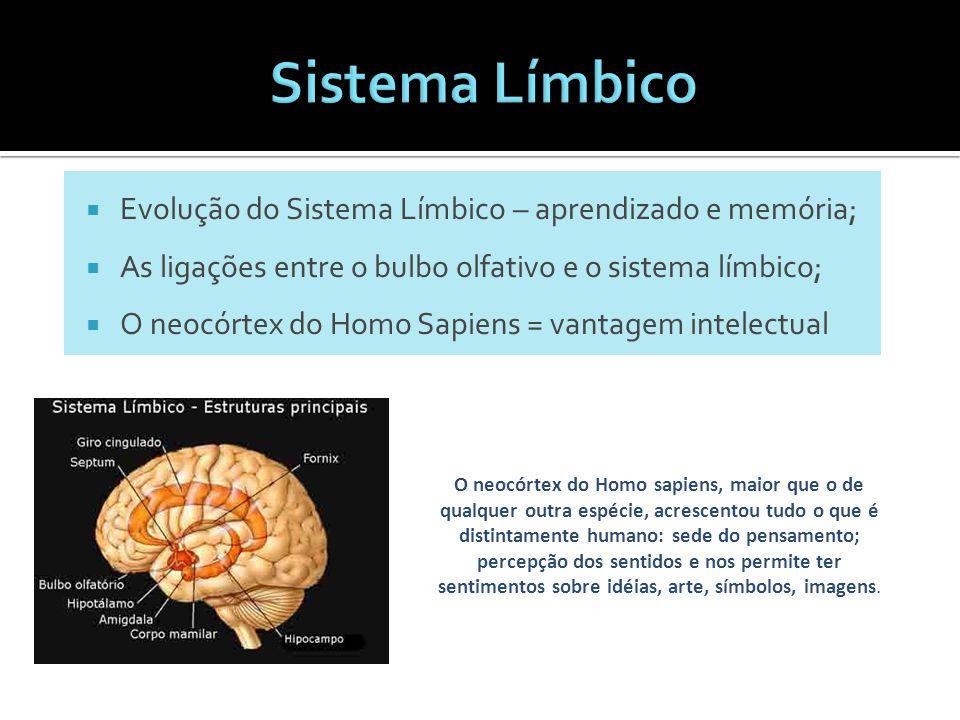  Evolução do Sistema Límbico – aprendizado e memória;  As ligações entre o bulbo olfativo e o sistema límbico;  O neocórtex do Homo Sapiens = vanta