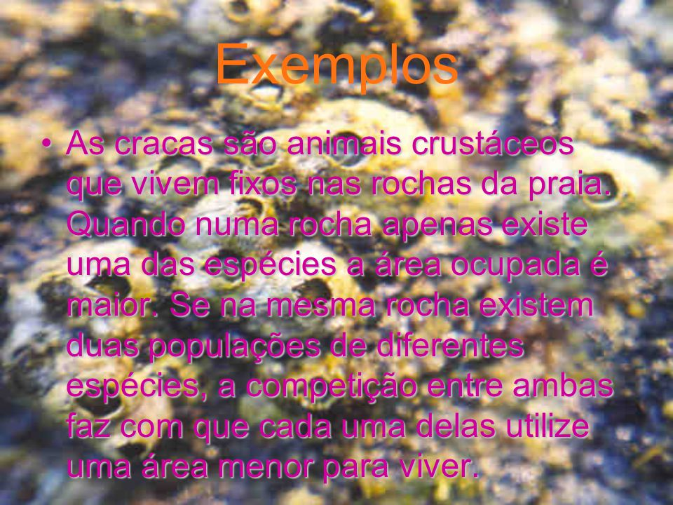 Exemplos Os pica-paus mesmo que sejam de diferentes espécies, competem entre si, pelo melhor alimento, para sobreviverem.