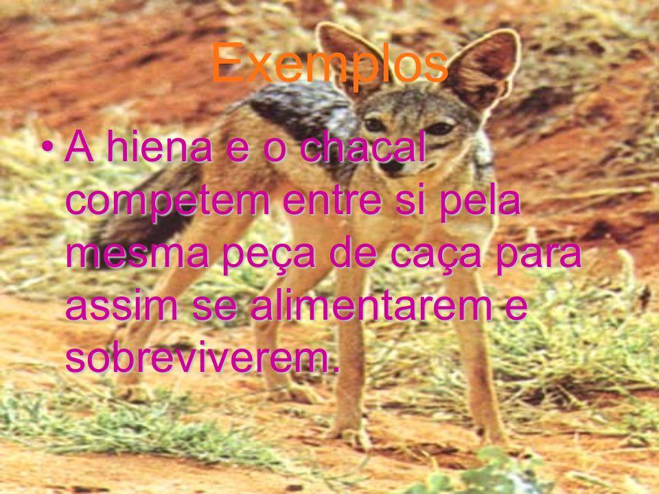 Exemplos A hiena e o chacal competem entre si pela mesma peça de caça para assim se alimentarem e sobreviverem.A hiena e o chacal competem entre si pela mesma peça de caça para assim se alimentarem e sobreviverem.