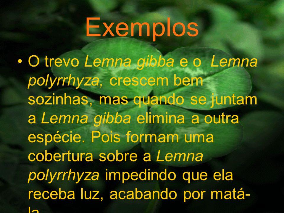 Exemplos O trevo Lemna gibba e o Lemna polyrrhyza, crescem bem sozinhas, mas quando se juntam a Lemna gibba elimina a outra espécie.