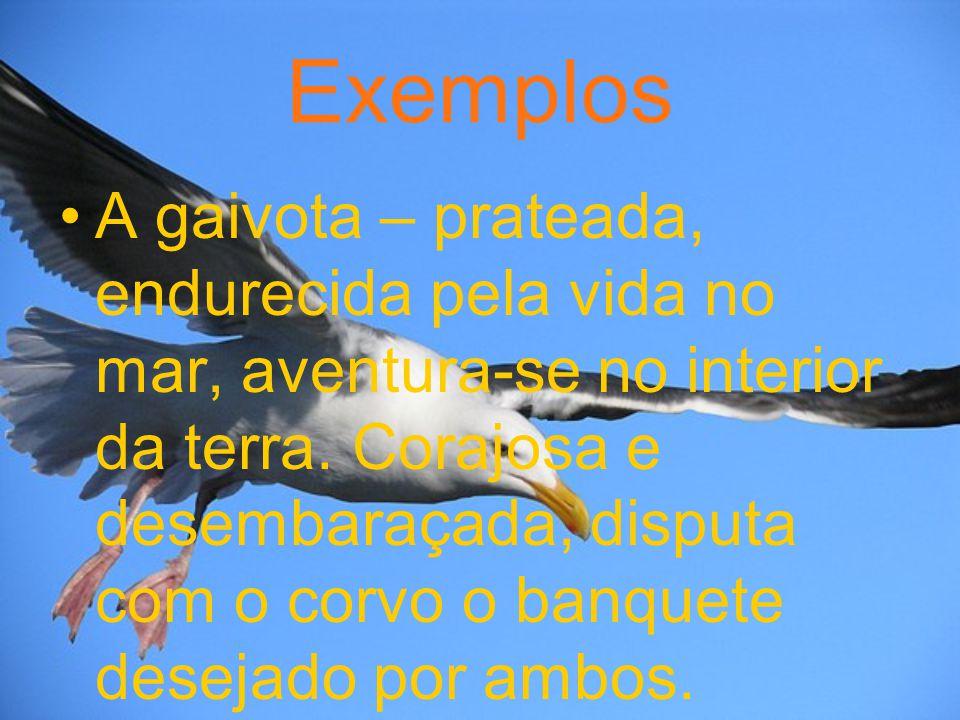 Exemplos A gaivota – prateada, endurecida pela vida no mar, aventura-se no interior da terra. Corajosa e desembaraçada, disputa com o corvo o banquete