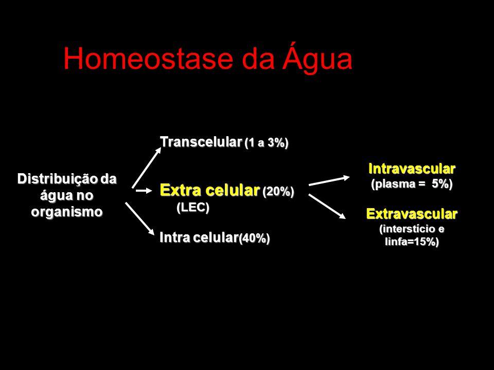 Homeostase da Água Distribuição da água no organismo Transcelular (1 a 3%) Extra celular (20%) (LEC) Intra celular (40%) Intravascular (plasma = 5%) E
