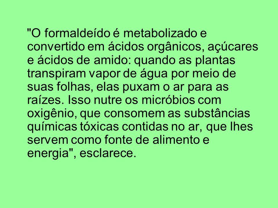 O formaldeído é metabolizado e convertido em ácidos orgânicos, açúcares e ácidos de amido: quando as plantas transpiram vapor de água por meio de suas folhas, elas puxam o ar para as raízes.