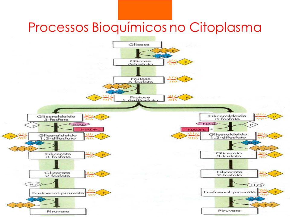 Processos Bioquímicos no Citoplasma