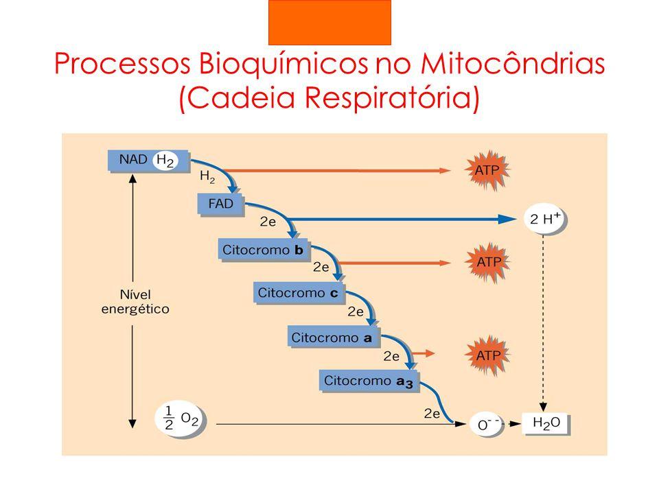 Processos Bioquímicos no Mitocôndrias (Cadeia Respiratória)