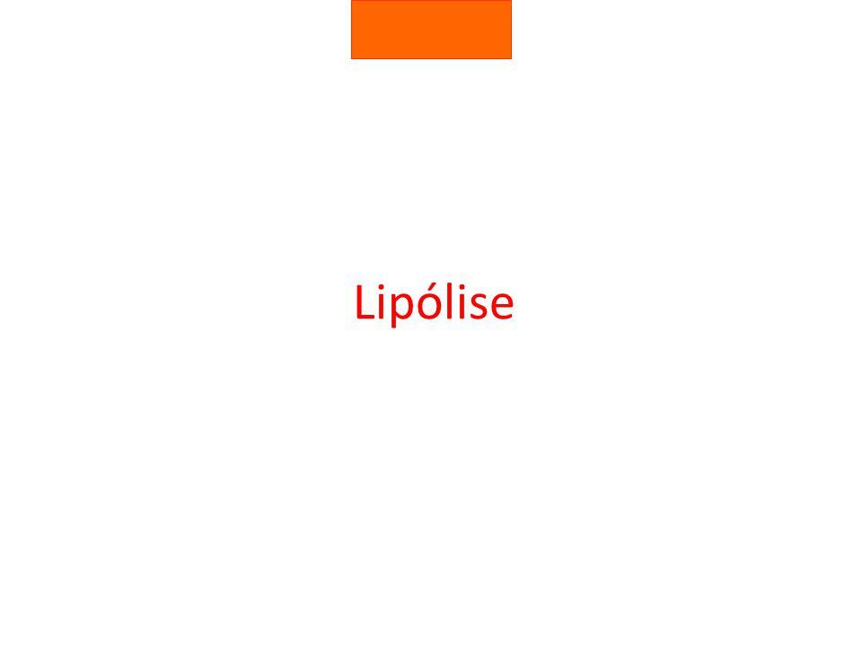 Lipólise