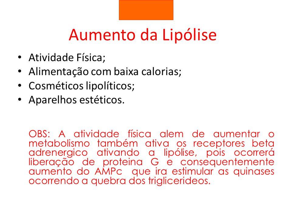 Aumento da Lipólise Atividade Física; Alimentação com baixa calorias; Cosméticos lipolíticos; Aparelhos estéticos. OBS: A atividade física alem de aum