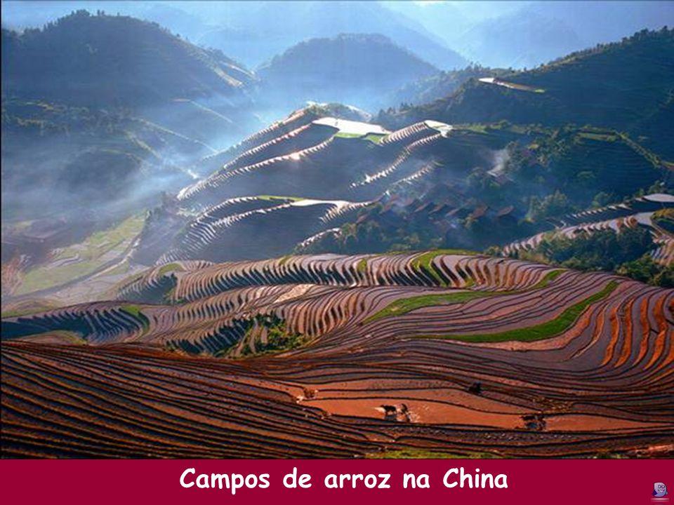 Campos de arroz na China