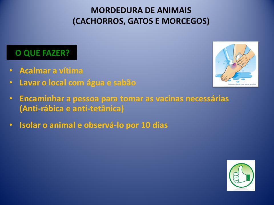 MORDEDURA DE ANIMAIS (CACHORROS, GATOS E MORCEGOS) O QUE FAZER.