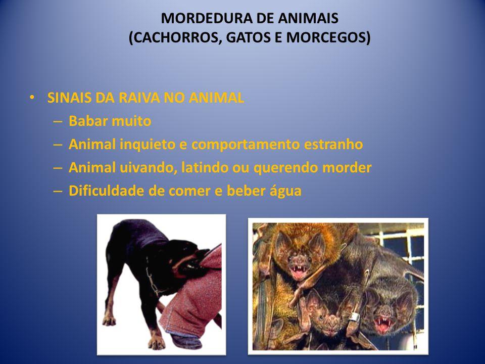 MORDEDURA DE ANIMAIS (CACHORROS, GATOS E MORCEGOS) SINAIS DA RAIVA NO ANIMAL – Babar muito – Animal inquieto e comportamento estranho – Animal uivando