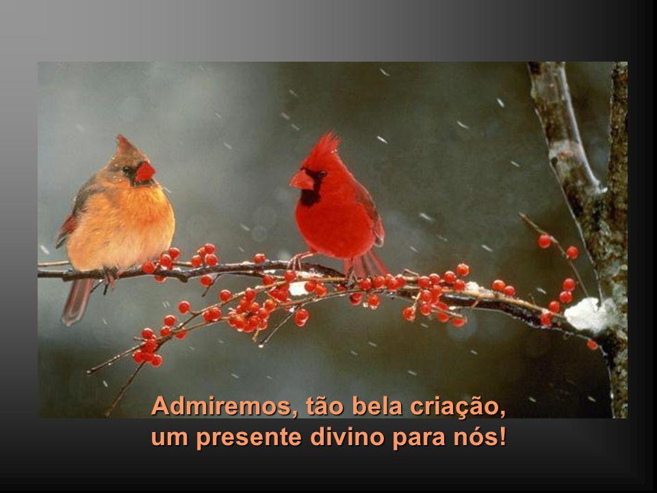 A beleza da variedade de cores e a harmonia de sua distribuição, em cada plumagem, nos impressionam...
