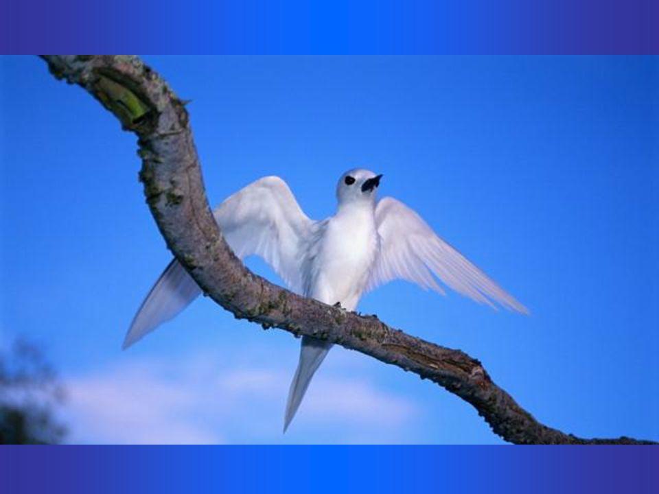 Admiremos, tão bela criação, um presente divino para nós!