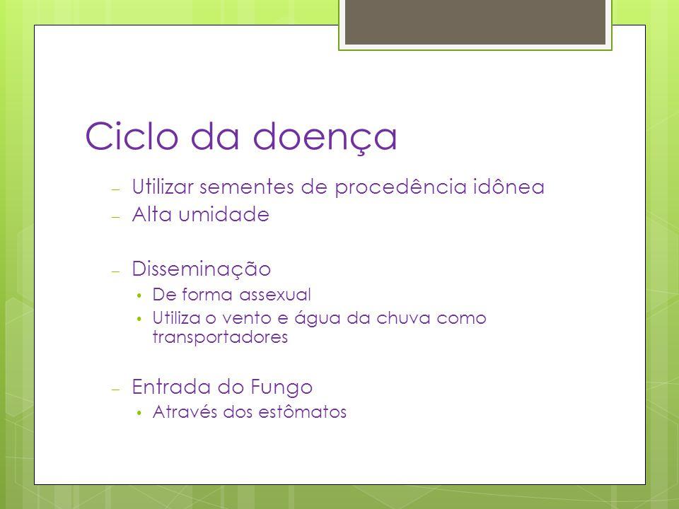 Ciclo da doença – Utilizar sementes de procedência idônea – Alta umidade – Disseminação De forma assexual Utiliza o vento e água da chuva como transpo