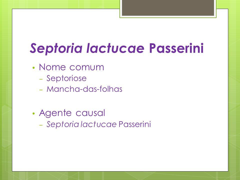 Septoria lactucae Passerini Nome comum – Septoriose – Mancha-das-folhas Agente causal – Septoria lactucae Passerini