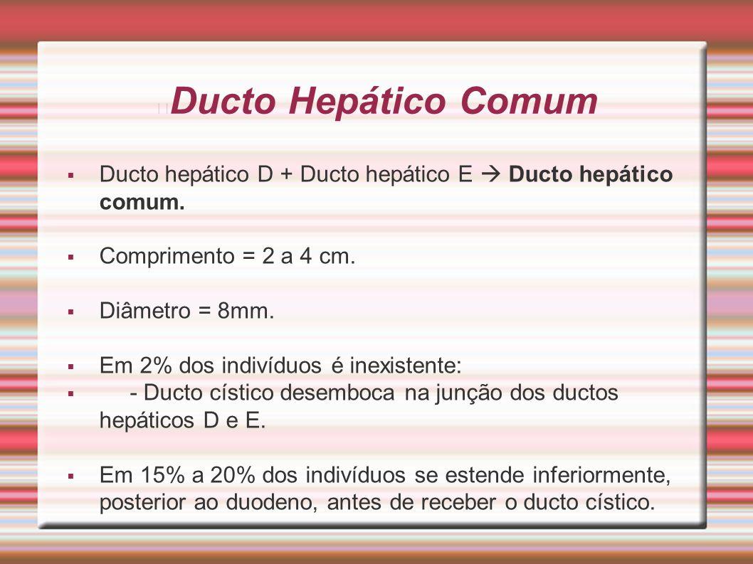 Ducto Hepático Comum  Ducto hepático D + Ducto hepático E  Ducto hepático comum.  Comprimento = 2 a 4 cm.  Diâmetro = 8mm.  Em 2% dos indivíduos