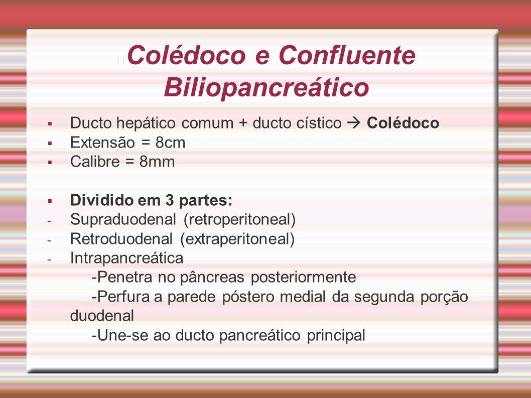 Colédoco e Confluente Biliopancreático  Ducto hepático comum + ducto cístico  Colédoco  Extensão = 8cm  Calibre = 8mm  Dividido em 3 partes: - Su