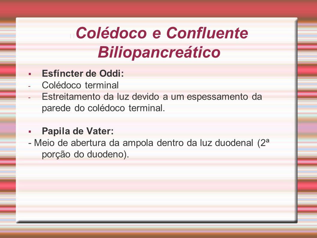 Colédoco e Confluente Biliopancreático  Esfíncter de Oddi: - Colédoco terminal - Estreitamento da luz devido a um espessamento da parede do colédoco