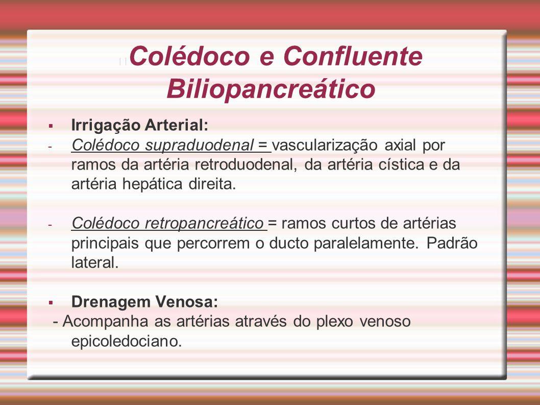 Colédoco e Confluente Biliopancreático  Irrigação Arterial: - Colédoco supraduodenal = vascularização axial por ramos da artéria retroduodenal, da ar