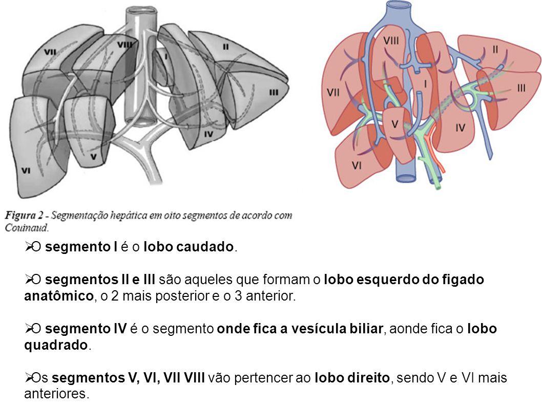  O segmento I é o lobo caudado.  O segmentos II e III são aqueles que formam o lobo esquerdo do figado anatômico, o 2 mais posterior e o 3 anterior.