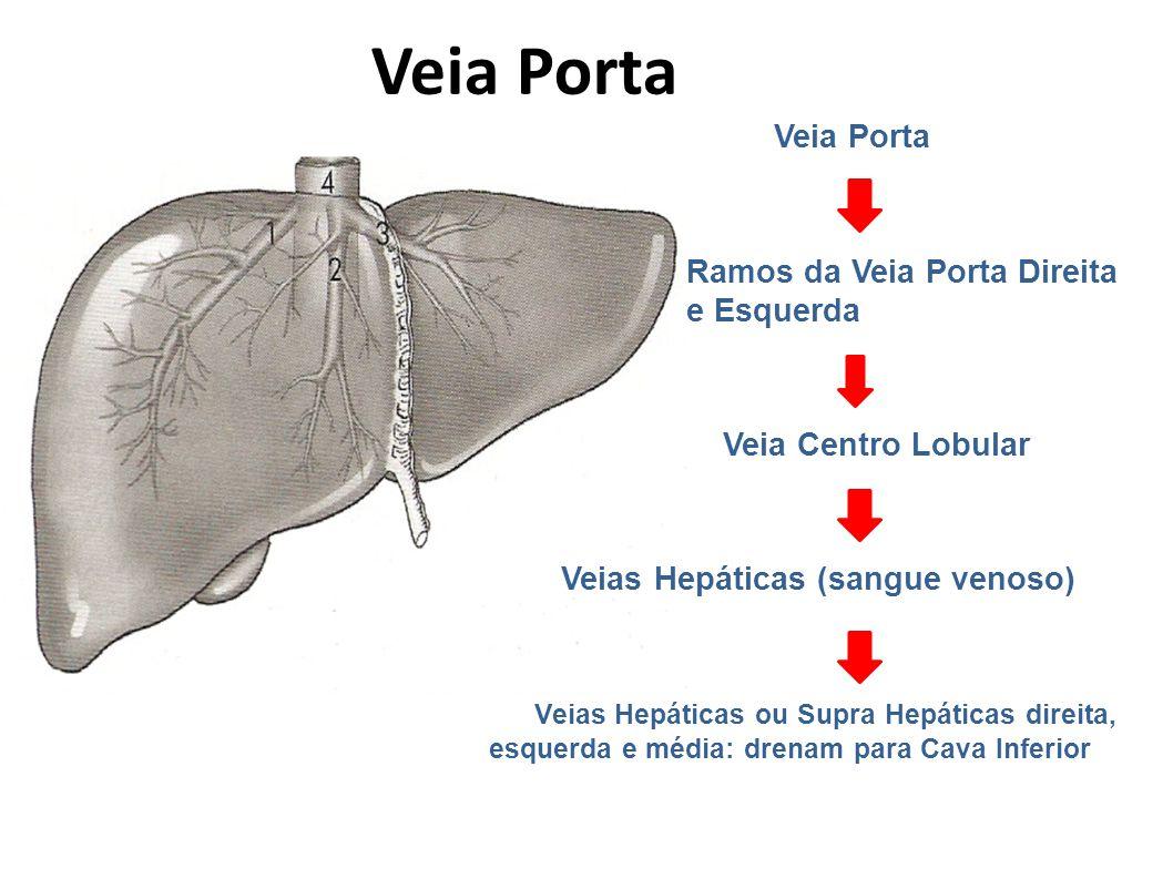 Veia Porta Ramos da Veia Porta Direita e Esquerda Veia Centro Lobular Veias Hepáticas (sangue venoso) Veias Hepáticas ou Supra Hepáticas direita, esqu