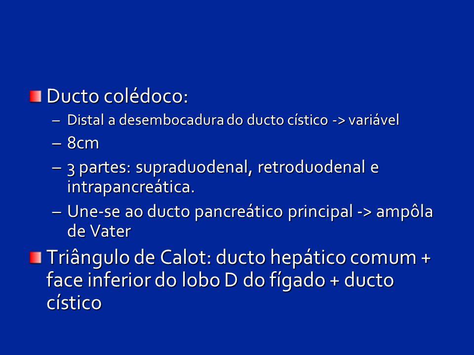 Ducto colédoco: –Distal a desembocadura do ducto cístico -> variável –8cm –3 partes: supraduodenal, retroduodenal e intrapancreática. –Une-se ao ducto
