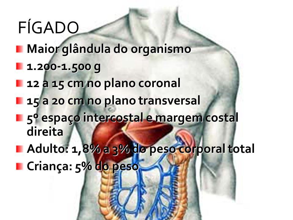 FÍGADO Maior glândula do organismo 1.200-1.500 g 12 a 15 cm no plano coronal 15 a 20 cm no plano transversal 5º espaço intercostal e margem costal dir