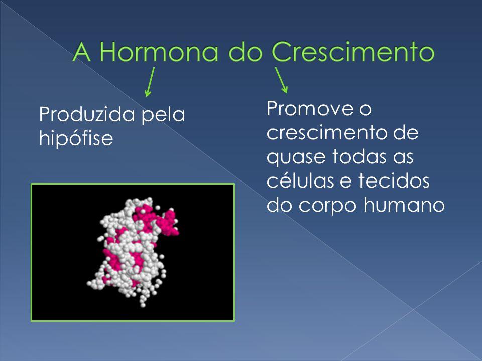 Produzida pela hipófise Promove o crescimento de quase todas as células e tecidos do corpo humano