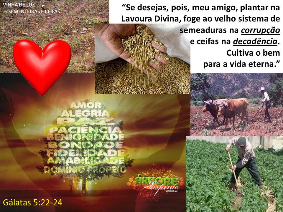 """""""Se desejas, pois, meu amigo, plantar na Lavoura Divina, foge ao velho sistema de semeaduras na corrupção e ceifas na decadência. Cultiva o bem para a"""