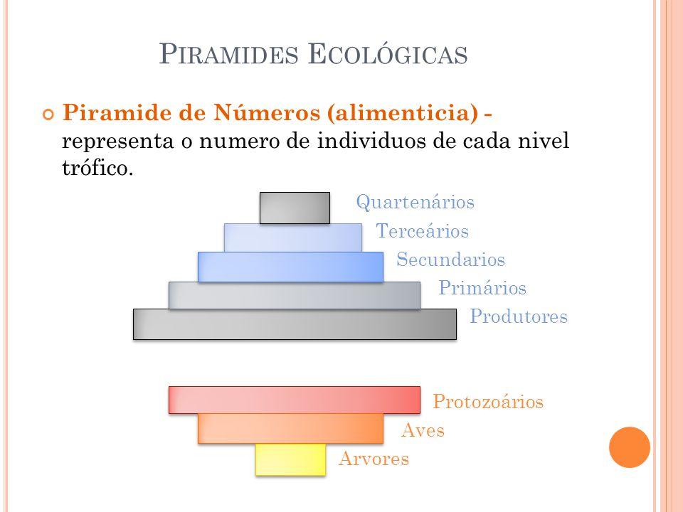 P IRAMIDES E COLÓGICAS Piramide de Números (alimenticia) - representa o numero de individuos de cada nivel trófico. Quartenários Terceários Secundario