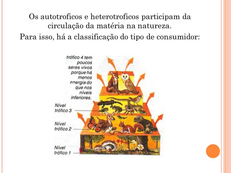 Os autotroficos e heterotroficos participam da circulação da matéria na natureza. Para isso, há a classificação do tipo de consumidor: