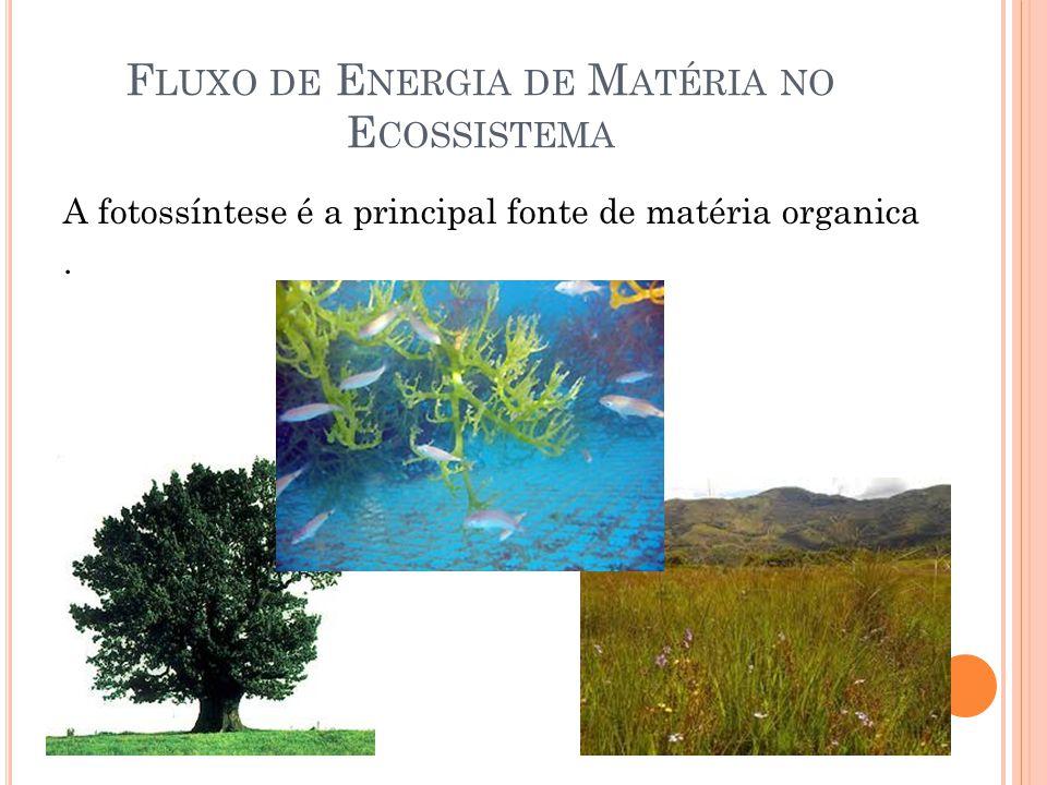 F LUXO DE E NERGIA DE M ATÉRIA NO E COSSISTEMA A fotossíntese é a principal fonte de matéria organica.