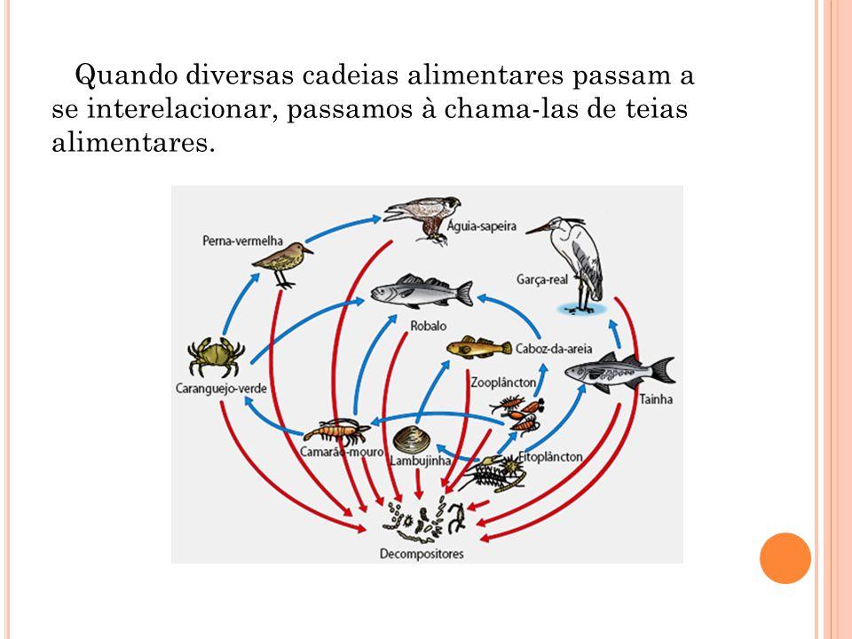 P IRAMIDES E COLÓGICAS Piramide de Números (alimenticia) - representa o numero de individuos de cada nivel trófico.