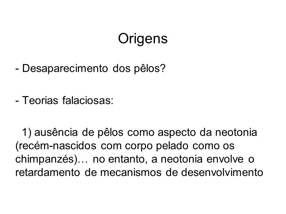 Origens - Desaparecimento dos pêlos? - Teorias falaciosas: 1) ausência de pêlos como aspecto da neotonia (recém-nascidos com corpo pelado como os chim