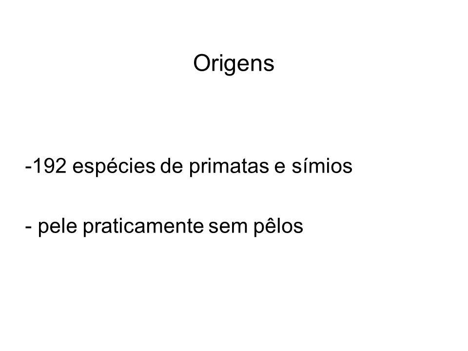 Origens -192 espécies de primatas e símios - pele praticamente sem pêlos