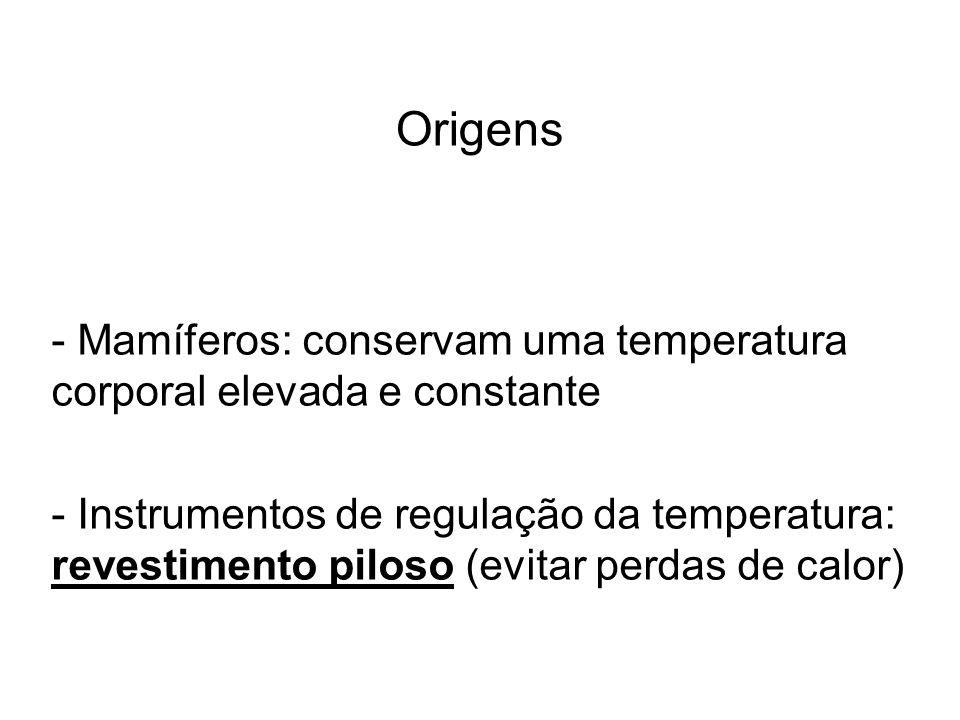 Origens - Mamíferos: conservam uma temperatura corporal elevada e constante - Instrumentos de regulação da temperatura: revestimento piloso (evitar pe