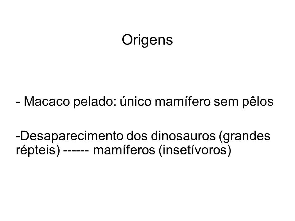 Origens - Macaco pelado: único mamífero sem pêlos -Desaparecimento dos dinosauros (grandes répteis) ------ mamíferos (insetívoros)